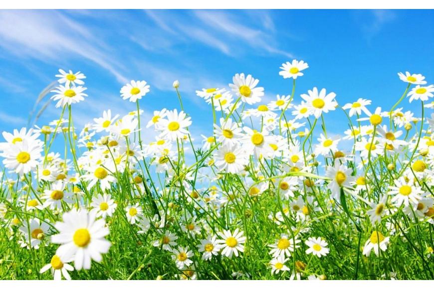 Renueva tu casa ¡que es primavera!
